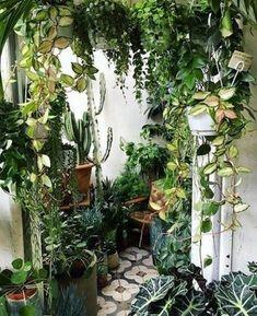 Room With Plants, House Plants Decor, Plant Decor, Plant Rooms, Decoration Plante, Balcony Decoration, Tropical Backyard, Plant Aesthetic, Balcony Garden
