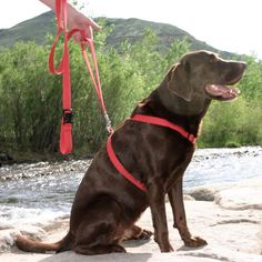 9 best Made in USA Roundup: Dog Harnesses images on Pinterest | Dog