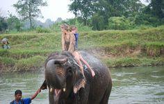 Ride an elephant!