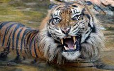 immagini bellissime di animali - Cerca con Google