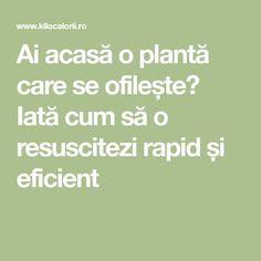 Ai acasă o plantă care se ofilește? Iată cum să o resuscitezi rapid și eficient Plant