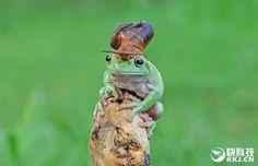 【情報】奇特的一幕:「蛙牛合體」 @世界之不可思議 哈啦板 - 巴哈姆特