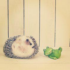 hedgehog + frog