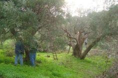 La Potatura - Bäume schneiden