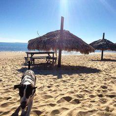 ¡Sol, arena y playa! Que más podrías pedir #SanFelipe Inicia tu aventura visitando: www.descubresanfelipe.com Foto-aventura por posergabe
