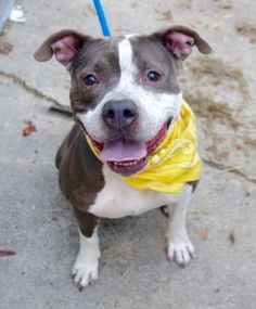 I WAS MURDERED BY NYC ACC 1/6/17 - PLEASE READ MY STORY! I WAS PERFECTLY HEALTHY AT INTAKE, NOT TAKEN PROPER CARE OF IN THIS HOUSE I WAS TOLD WAS A SHELTER?, AND I BECAME ILL. NO ONE WANTED TO HELP ME GET BETTER! WHAT DID I DO WRONG HUMANS? I LOVED YOU SO VERY MUCH AND WAS TOTALLY HEARTBROKEN MY PEOPLE MOVED WITHOUT ME!! WHY DID YOU HAVE TO MURDER ME?