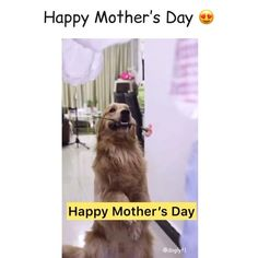 Baby Animals, Funny Animals, Cute Animals, Puppy Care, Dog Care, Funny Dog Videos, Funny Dogs, Happy Mother S Day, Animal Memes