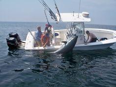 Bluefin Tuna Fishing Boats