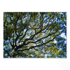 his picture was taken at the Whalehead Club in Corolla NC. The Outer Banks or OBX as many of you know it is known for their beautiful beaches, but many of their attractions are just as beautiful. This is a picture of a tree looking up at the sky. The branches are like arms reaching and stretching for the sky.$10.55