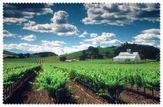 Organic Vines for Better Wines