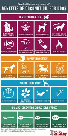 Read these help, hacks and guide for basic dog care and training tips - Bring a doggy bag when you to grab your dog's feces. You might be accustomed to taking care of your dog's excrement, but others shouldn't must clean it in their yard. Dog Health Tips, Pet Health, Health Care, Coconut Oil For Dogs, Oils For Dogs, Benefits Of Coconut Oil, Dog Care Tips, Homemade Dog Food, Homemade Dog Shampoo