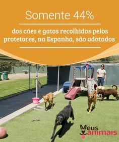 Poucos animais recolhidos pelos protetores são adotados  Infelizmente, dos #animais resgatados no ano passado, 16% continuam vivendo com os #protetores que os #resgataram, ou têm viajado de abrigo em abrigo.