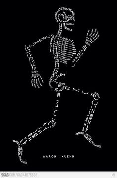 Functional anatomy :)