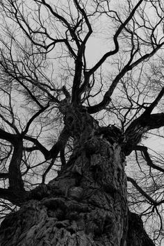 We are all branches of the same tree. @ fort harrod