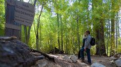 Hike the highest peak in Southern California, San Gorgonio mountain, while visiting Big Bear.