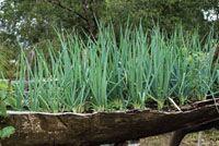 La canoa desempeña diversas funciones en la vida de las comunidades negras. Zoteas o huertas caseras.