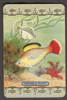 Vintage Coles Swap Card - Variable Platy *FREE POSTAGE* in Collectables, Paper, Postcards, Playing Cards | eBay