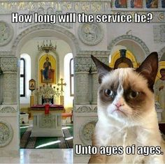 Grumpy Orthodox Cat!