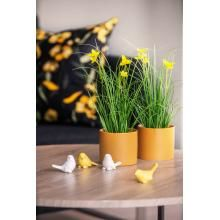 Tid for påskekos Plants, Plant, Planets
