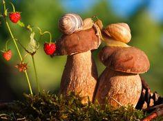 16 Increíbles fotos que prueban que los caracoles viven en un mundo mágico.