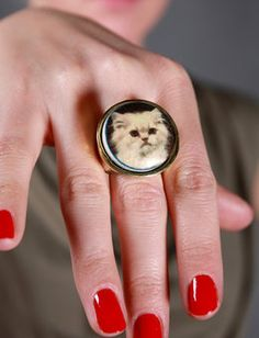 Cat picture ring.... i find this REALLY funny for some reason