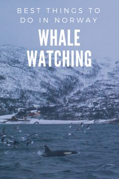 Whale Watching in Tromsø, Things to do in Norway - Whale watching was one of our favorite activities in Norway! We saw a pod of orcas and I caught my first fish! Things to do in Tromso, Norway   What to do in Norway   Where to go in Norway #Norway #whalewatching #orca