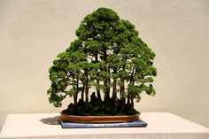 miniature bonsai forests 10 15 Beautiful Bonsai Forests