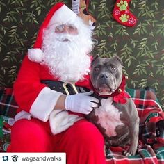 Adele asked Santa to find her #foreverhome today at @wagsandwalks adoption event from 11a-2p at hosted by our Venice store. Come visit us and find your new family member and cross off all your pups from your xmas shopping list!