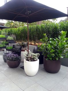 Ótima ideia para plantio de Clusia sp. Clusia, Planting Flowers, Flower Plants, Plant Decor, Planter Pots, Patio, Landscape, Vertical, Landscaping Ideas