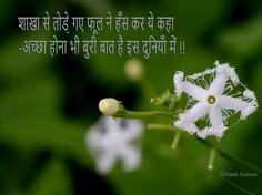 Eyeshadow Tutorials, Shayari In Hindi, Golden Leaves, Faith, Thoughts, Quotes, Quotations, Loyalty, Quote