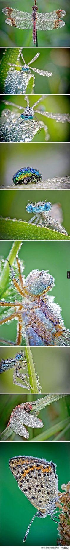 owady po deszczu
