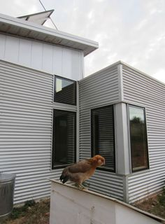 Prefab Home Off Grid Construction Continues; Passive Solar Keeps Us Comfortable And... Joy, Grief.