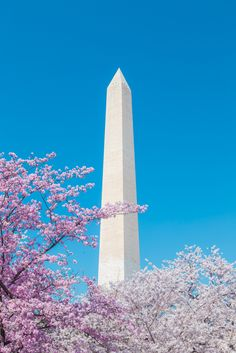 Everything You Need to Know About Washington, D.C.'s Cherry Blossom Fest