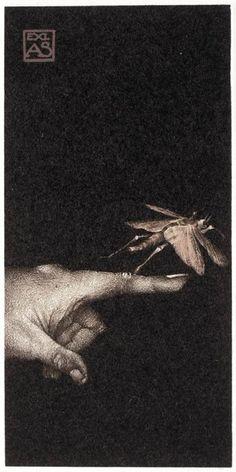 Artemis Dreaming, Exlibris AK, Dragonfly, 2008   Marina Richterova...