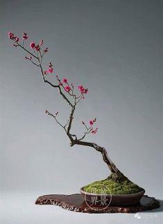 bonsai #japanesegardening