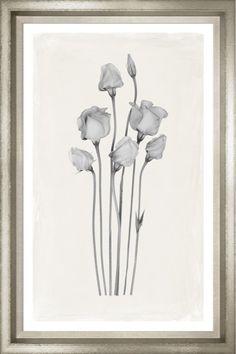 TROWBRIDGE Gallery - Philippe Flowers Black & White - http://www.trowbridgegallery.com/display-set.php?SetCode=PFBW