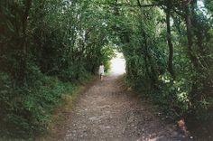 Woodland Walk, Falmouth, Cornwall.