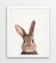 Bunny Print Rabbit Print Woodlands Animals Art by ULTRASONICBOOM