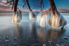 Frozen trees near Lake Michigan. #tree #nature