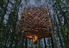 The Tree Hotel in Sweden currently features 5 rooms, one of which is the bird's nest.