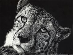 Scratch Art: CHEETAH by *Twilight-Veil on deviantARThttp://fc02.deviantart.net/fs44/i/2009/108/2/1/Scratch_Art__CHEETAH_by_Twilight_Veil.png