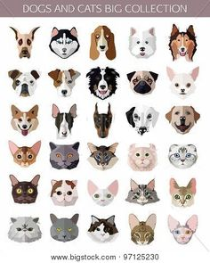 Set of flat popular Breeds of Cats and Dogs icons. poster