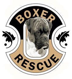 Shout's #1 supported dog rescue.  http://www.boxer-rescue-la.com