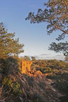 Torrey Pines Hike, La Jolla - Easy Hikes in San Diego with Beautiful Coastal Views California National Parks, Visit California, California Coast, California Travel, Torrey Pines Hike, Torrey Pines State Reserve, California Tourist Attractions, San Diego Attractions, San Diego Travel