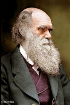 Charles Darwin, taken from a colourized photo found in his letters at the Natural History Museum General Library. Robert Darwin, Charles Darwin, Darwin Tattoo, Famous Freemasons, Natural History Museum, Science, Interesting Faces, Historical Photos, Geology