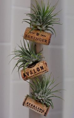Adorable air plant cork planter magnets! #wine #diy #howto