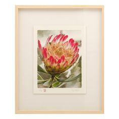 adriaan vorster framed protea pink 70x60cm