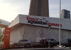 Ripley's Aquarium Toronto --- Gotta check it out! Travel With Kids, Family Travel, Family Trips, Best Places To Vacation, Places To Go, Ripleys Aquarium Toronto, Toronto Canada, Canada Eh, Ripley Aquarium