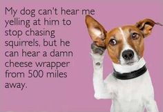Canine selective hearing...