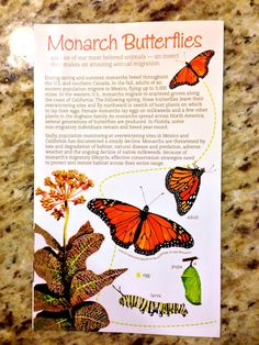 Monarch Butterflies Booklet